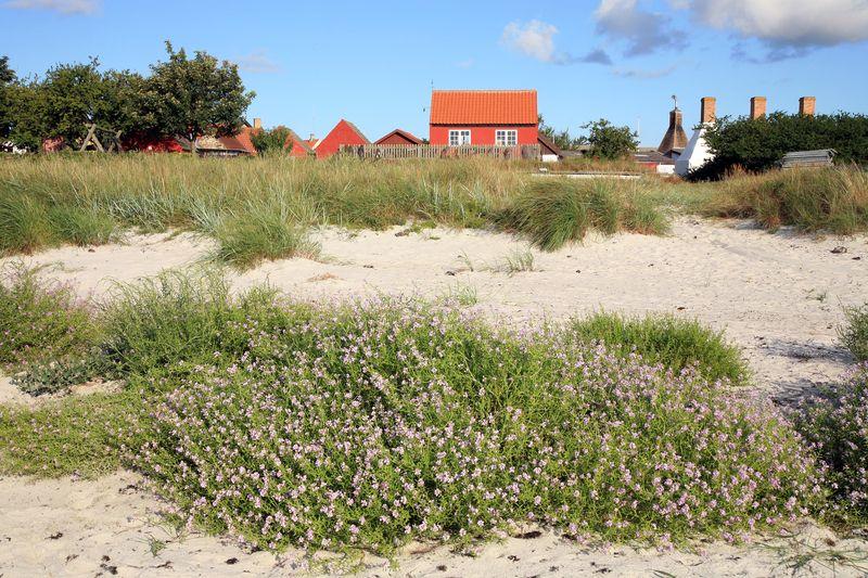 Dänemark mit Hund: Urlaubsspaß für die ganze Familie